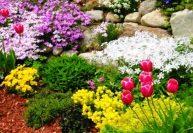 Особенности растений