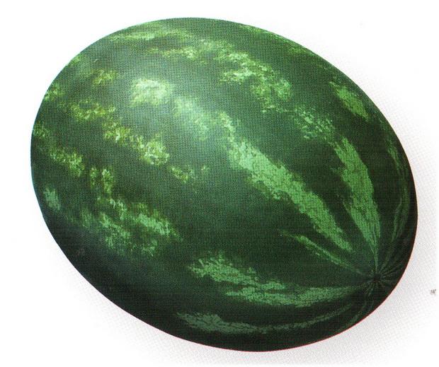 Сорт арбуза: Паладин   f1