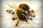 Пчелы несовместимы с современным сельским хозяйством
