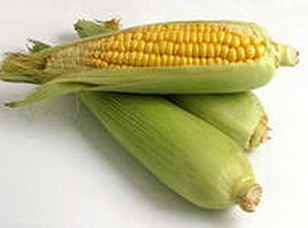 Сорт кукурузы: Пхб 00
