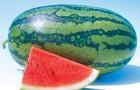 Сорт арбуза: Премиум f1