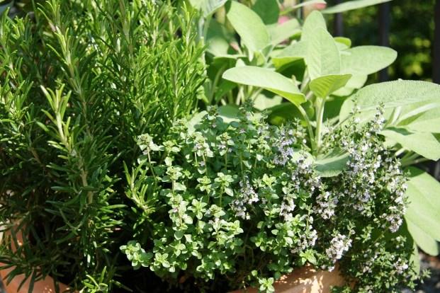 Пять трав, которые обязательно нужно выращивать