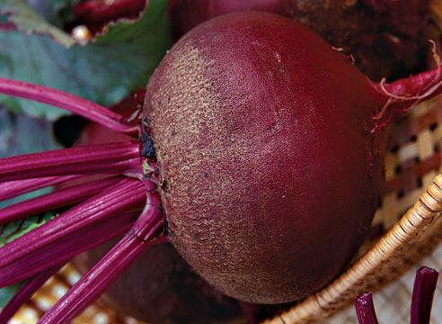 Рак или зобоватость корней свеклы