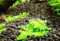 Размножение растений альпинария
