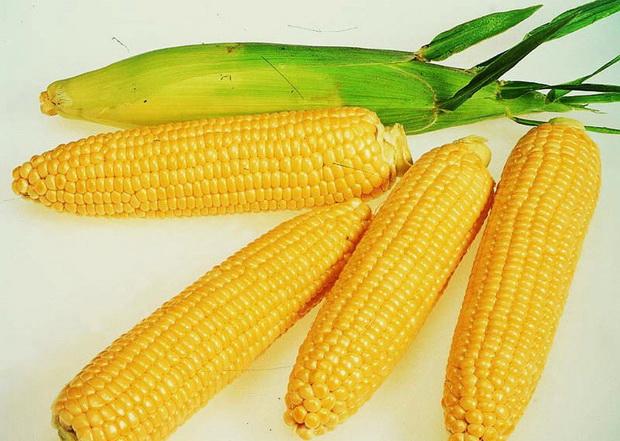 Сорт кукурузы: Реалли кс