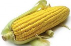 Сорт кукурузы: Рм 341 м