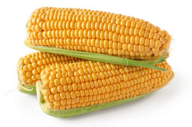 Сорт кукурузы: Роберто