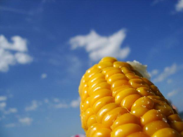 Сорт кукурузы: Родна
