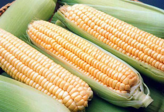 Сорт кукурузы: Росмолд 159 св