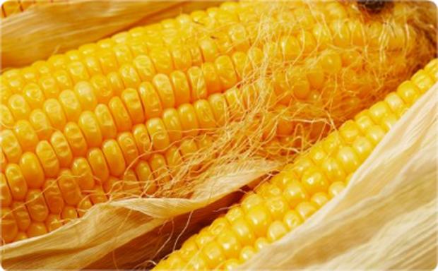 Сорт кукурузы: Росс 180 мв