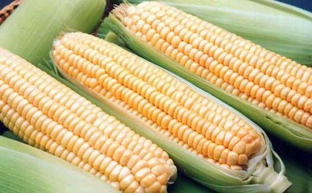 Сорт кукурузы: Российская лопающаяся 3