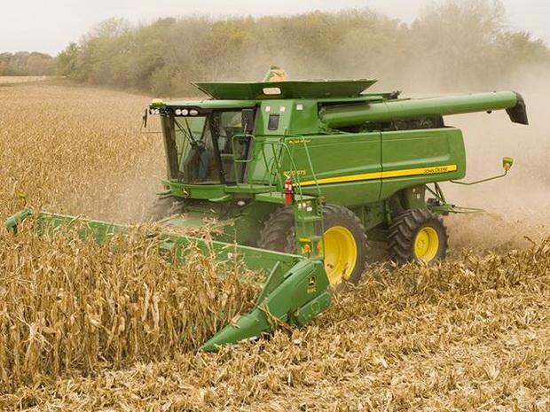 Сорт кукурузы: Рпк 7346