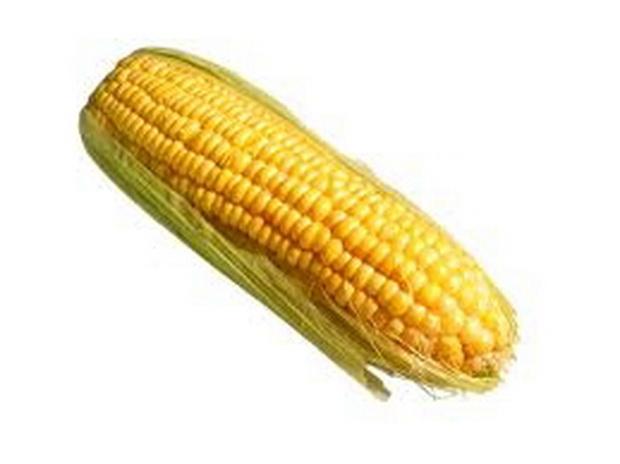 Сорт кукурузы: Сегеди тк 465
