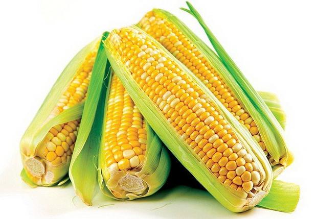 Сорт кукурузы: Силекс