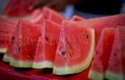 Сорт арбуза: Силвиа f1