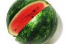 Сорт арбуза: Синчевский