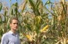 Сорт кукурузы: Союз 400 мв