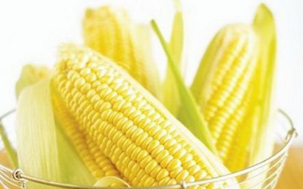 Сорт кукурузы: Спе 015
