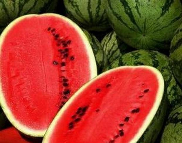 Сорт арбуза: Стайл   f1