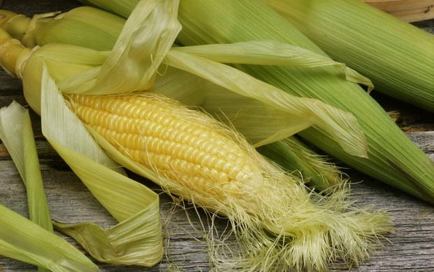 Сорт кукурузы: Целест