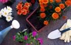 «Мягкий» способ удобрения