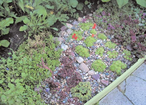 Цветники для сада