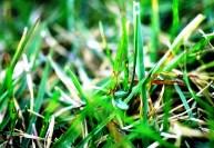 Болезни газона