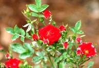 Болезни цветов