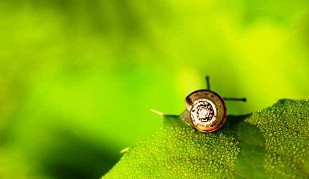 Для защиты растения подслушивают вредителей