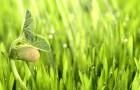 Дружба и вражда растений