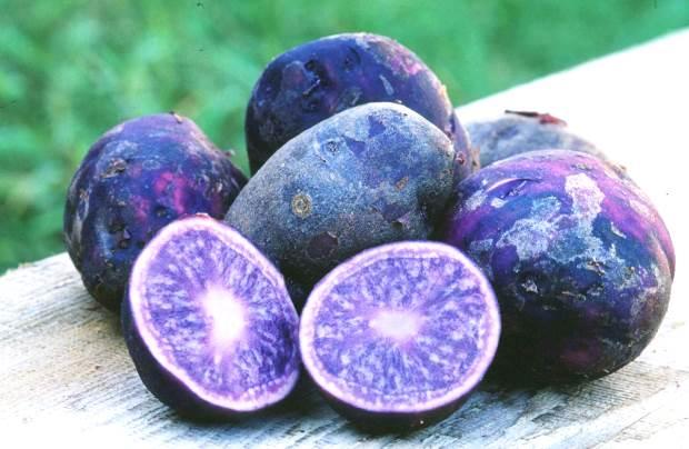 Фиолетовый картофель полезнее всех светлых сортов