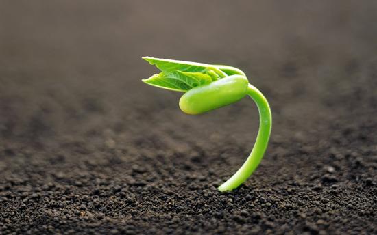 Где приобретать семена