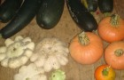 Кабачки, патиссоны и тыквы