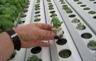 Как питаются растения