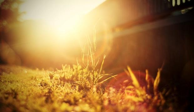 Как растения спасаются от солнечных ожогов