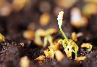 Как размножать комнатные растения