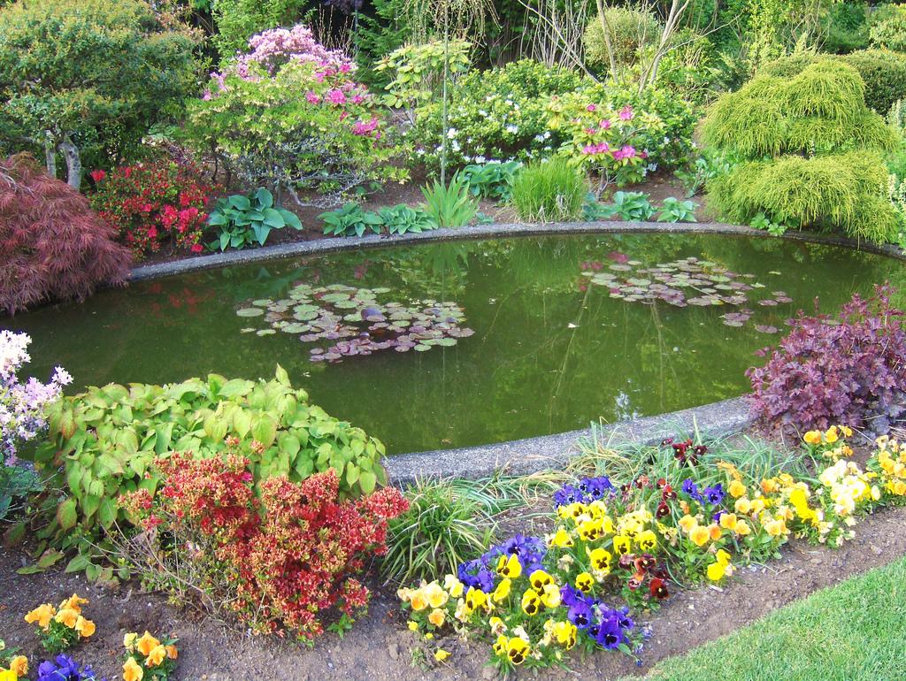 Каким должен быть естественный водоем?