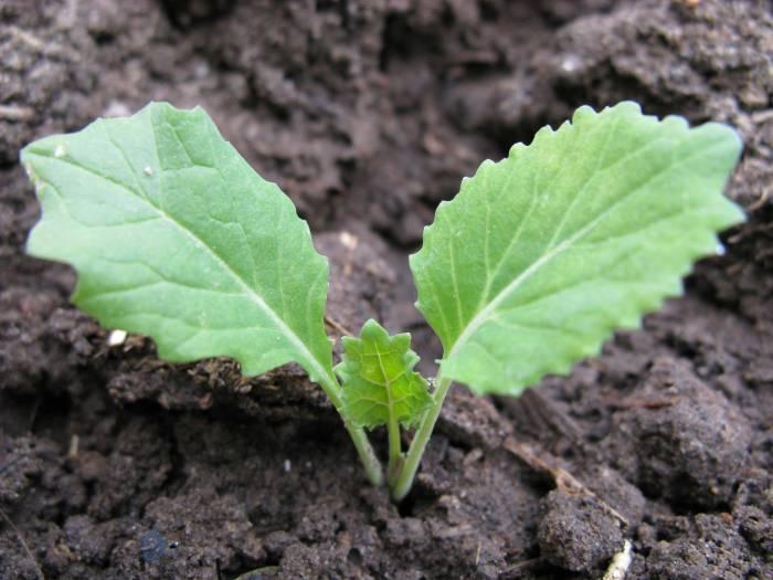 Когда высевать семена