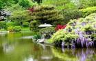 Кустарники для оформления водоемов