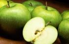 Лосьон яблочный