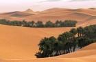 Можно ли засадить пустыню деревьями?