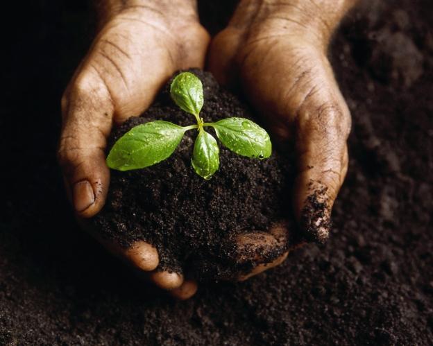 Плодородны ли наши почвы?