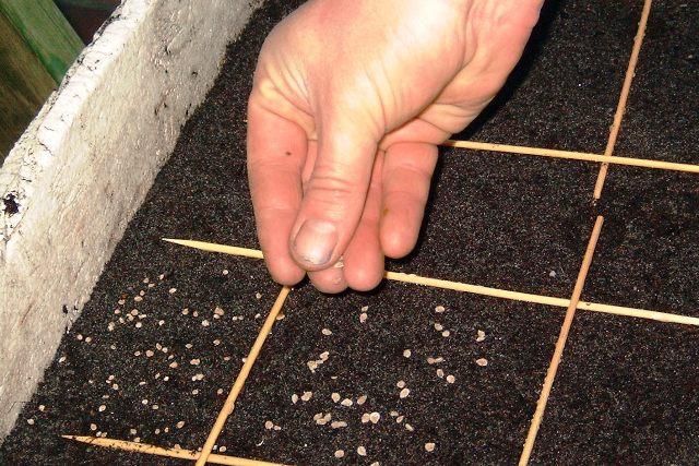 Подготовка и посев семян
