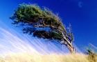 С новым климатом ветер выдует из почвы углерод