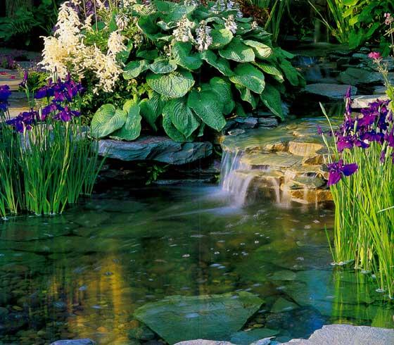 Сиреневые цветники для украшения водоема