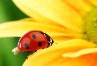 Способы борьбы с болезнями цветов