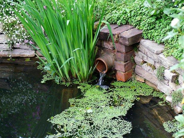 Уход за водоемом весной