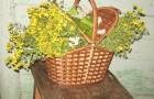 Ванночка с листьями березы и подорожника