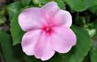 Влаголюбивые растения для оформления водоема