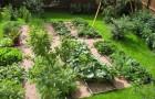 Вскапывание и рыхление огорода